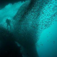 پژوهشهای متنوع حوزه محیط زیست دریایی در خلیج فارس اجرا میشود