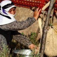 جمعیت عشایر استان اردبیل رو به کاهش است