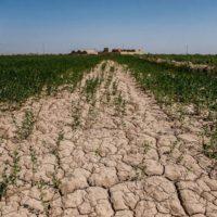 ۲ میلیون هکتار از خاک کرمانشاه در معرض فرسایش شدید قرار دارد