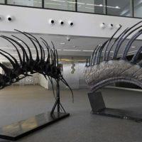 اسکلت دایناسور شاخ دار کشف شد